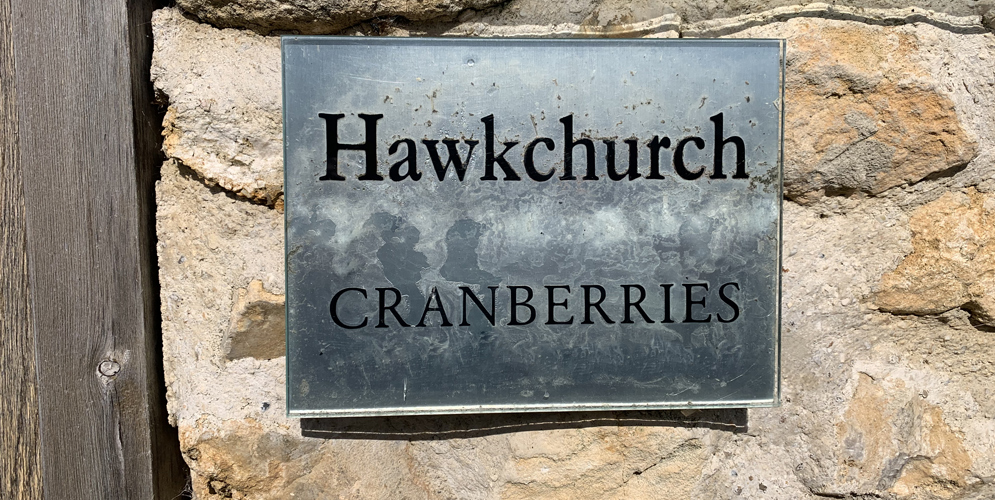 Hawkchurch_at_cranberries_0
